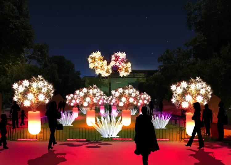 Les couleurs du jardin à Lyon