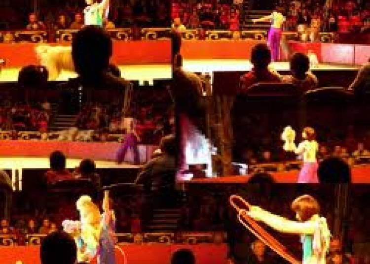 Le Grand Cirque de St-Petersbourg, L�gende � La Foret Fouesnant