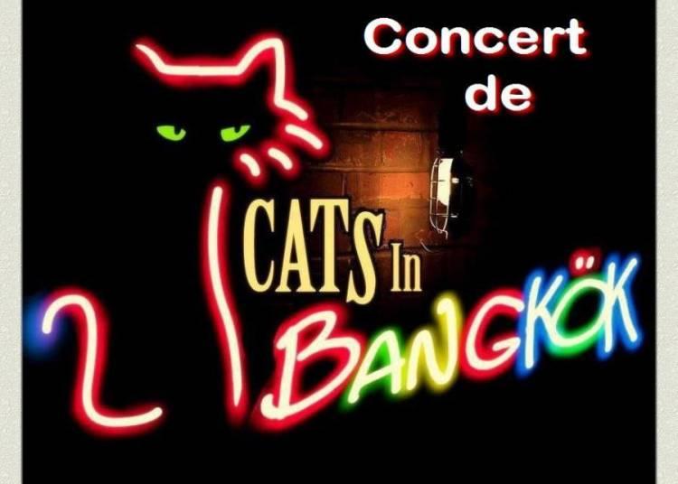 Cat's In Bangkok � Bordeaux