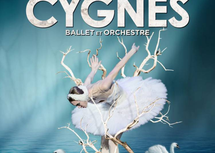 Le lac des cygnes � Bordeaux