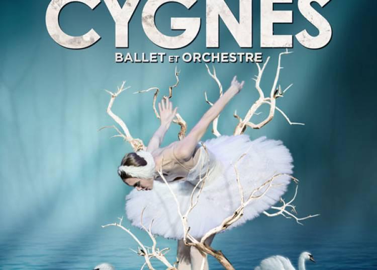 Le lac des cygnes � Orl�ans