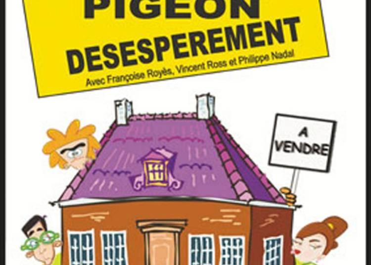 Recherche pigeon d�sesp�r�ment � Paris 10�me