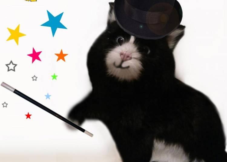 Le petit chat magicien � Nimes