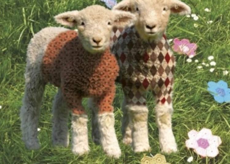 Un Mouton Dans Mon Pull � Clichy Sous Bois