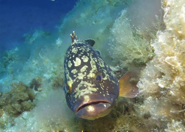 Photos sous-marines � La Seyne sur Mer