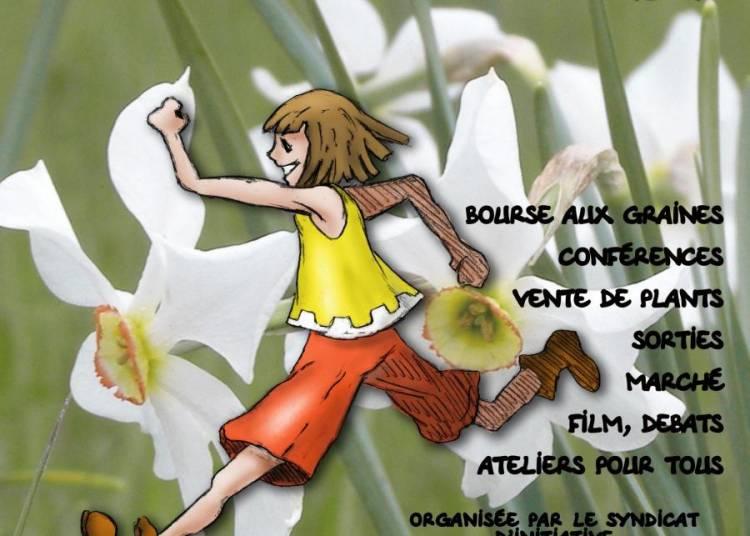 Fete du Narcisse 2016