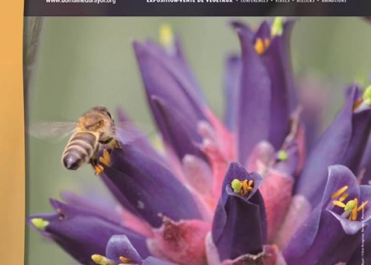 Gondwana, la F�te des Plantes m�diterran�ennes 2016