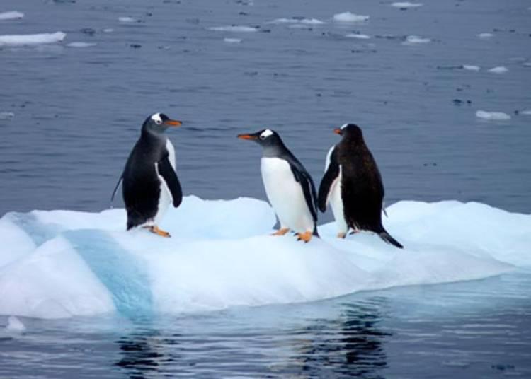 Cap Sur L'antarctique à Varces Allieres et Risset