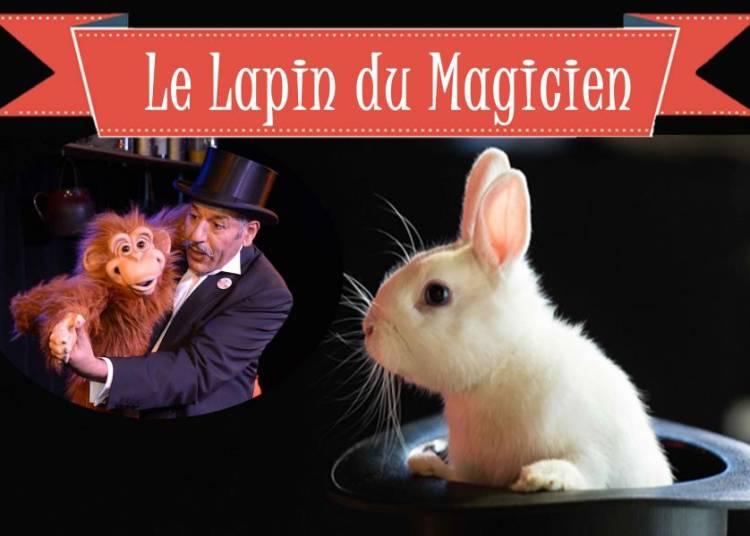 Spectacle de magie familial Le Lapin du Magicien � Nantes