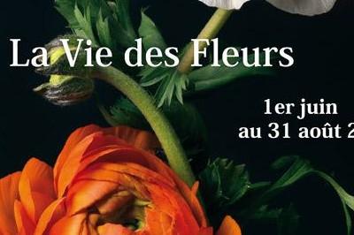 Exposition La Vie des Fleurs à Sainte Vertu