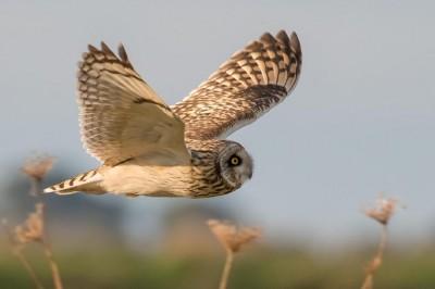Oiseaux en toute liberté à Mordelles