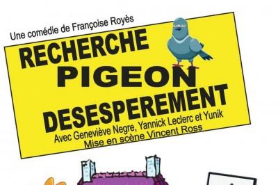 Recherche pigeon désespérément à Marseille