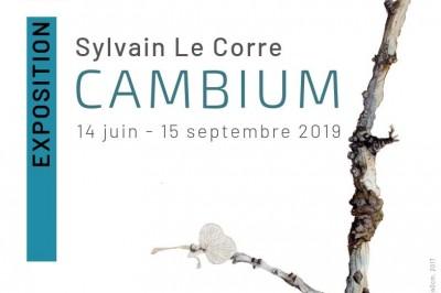 Sylvain LE CORRE - «CAMBIUM» à La Richardais