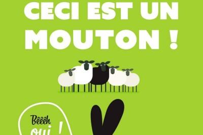 Ceci Est Un Mouton... Bêêêh Oui ! à Muret