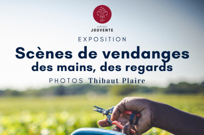 Scènes de Vendanges - photos de Thiabut Plaire à Illats