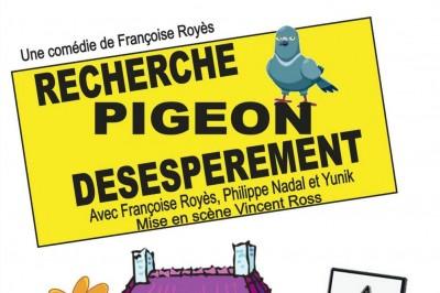 Recherche Pigeon Desesperement à Perpignan