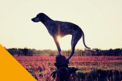 La Théorie du chien perché à Beaugency