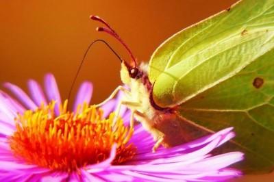 FETE DE LA NATURE 2021 - A travers mille et un regards - Mais où sont passés les insectes ? à Saint Bonnet du Gard
