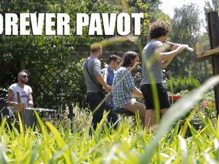 Forever Pavot