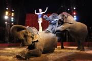 Cirque Medrano Toulouse